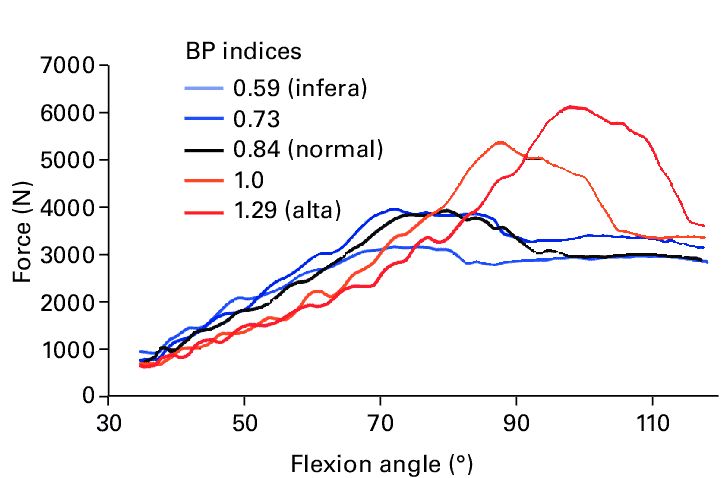 forces on the patella during knee flexion