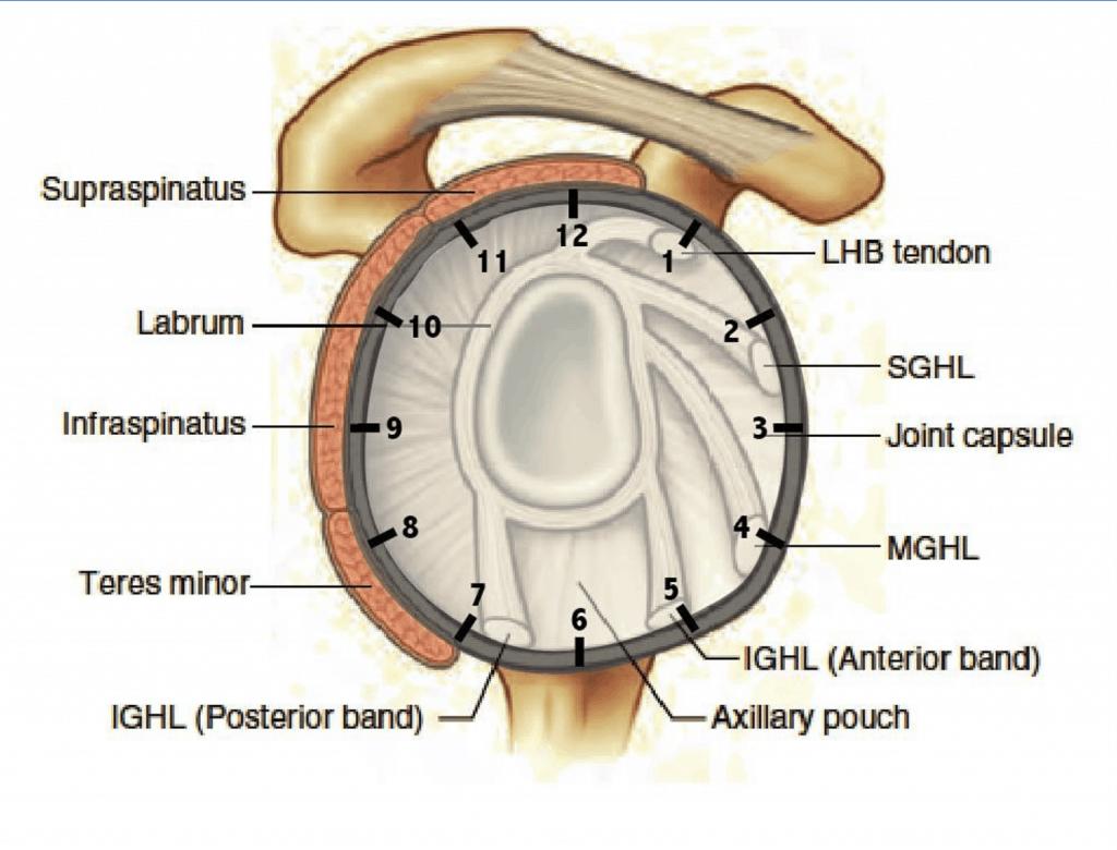 shoulder clock pattern
