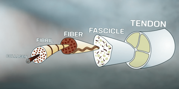 Complete guide to tendon pain